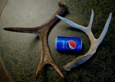 Moose & Deer Antlers Paddle Sheds Antlers Taxidermy Carving dog chews