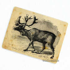 Moose Deco Magnet, Decorative Fridge Refrigerator Game Animal Hunter Gift