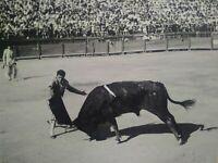 Rare grande photo argentique corrida signée noir et blanc parfait état