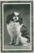 Unusual Vtg Cavalier King Charles Spaniel Dog Postcard Netherlands 1934