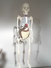Älteres Skelett anatomisches Lehrobjekt ca. 110cm hoch
