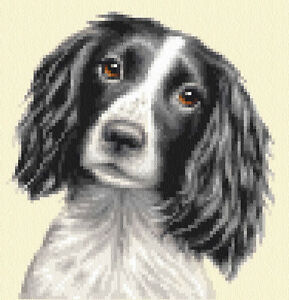 Black/White SPRINGER SPANIEL dog, pup Full counted cross stitch kit Jann Designs