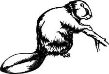 Beaver Vinyl Decal Car Cycle Truck Window Sticker
