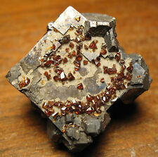 Classic Tri-State Ruby Sphalerite Crystals on Superb Galena Wow!