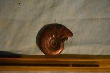 ammonite Sublunuloceras discoides callovien, Russie 22 en vente, a l'unité 27 mm