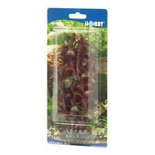 Hobby Rotala 16cm-Aquarienpflanzen Wasserschildkröten Kunstoffpflanzen Barsche