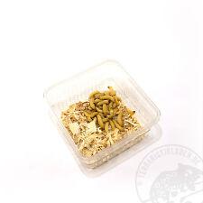 Wachsmaden Futterinsekten gesunde Futtertiere für Reptilien