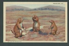 Three Prairie Dogs Mint