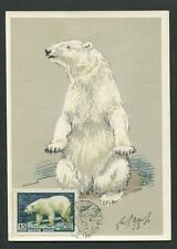 Russia MK 1957 Faune Ours Polaire Polar Bear Ours Blanc CARTE MAXIMUM CARD MC cm d7715