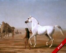 LEADING THE WHITE ARABIAN HORSE IN THE DESERT OIL PAINTING ART REAL CANVAS PRINT