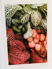 Unique handmade Fittonia Party greeting card w/professional printed photograph
