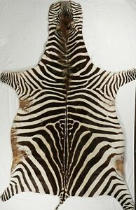 ZEBRA SKIN RUG, Authentic 20th-Century Zebra Hide. trophy grade. 6'x9'
