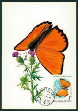 UNGARN MK 1970 SCHMETTERLINGE BUTTERFLY BUTTERFLIES MAXIMUM CARD MC CM ci06