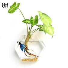 Irregular Wall Hanging Glass Planter Air Plant Terrarium Flower Pots Vase Garden