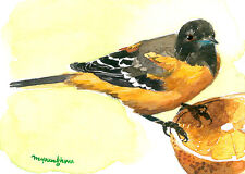 ACEO Limited Edition-Baltimore oriole's brilliance, Print of watercolor painting