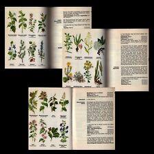 Kräuterbuch Heilkräuter Kräuter Heilpflanzen Anwendung Gesundheit Schönheit