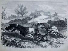 Original-Holzschnitte (1800-1899) mit Zoologie-Motiv von 1800-1899