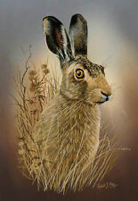 Brown Hare Limited Edition Print by Robert J. May