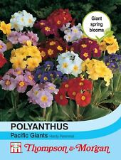 Thompson & Morgan - Flowers - Polyanthus Pacific Giants Mixed - 15 Seed