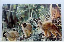Florida FL Silver Springs Glass Botton Boats Monkeys Jungle Cruise Postcard Old