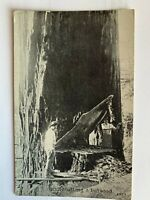 Vintage 1907 Lumberjacks Undercutting Giant Redwood Tree California CA Postcard