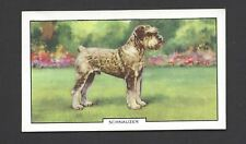 GALLAHER - DOGS, 2ND SERIES - #38 SCHNAUZER