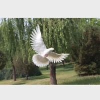 Fake Artificial Pigeon Feathered Bird Garden Home Decor Taxidermy Bird #3