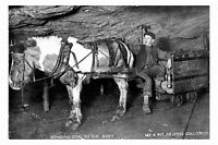 pt1363 - Pony in Brayton Colliery No 4 Pit , Durham - photograph 6x4