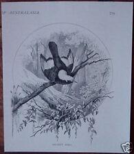 Original 1886 Australian Print REGENT BIRD
