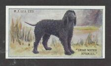 1923 Rare Uk Dog Art Rj Lea Chairman Cigarette Card Irish Water Spaniel