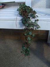 "Kunstpflanze Seide-Ceropegiahänger ""Mini"" l=65 cm grün-grau"