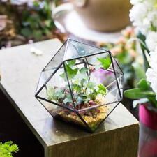 Modern Tabletop Glass Terrarium Planter Box DIY Decorative Flower Pot -Black