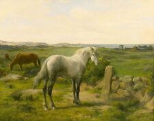 Bonheur Rosa Horses Near The Seaside Print 11 x 14   #3966