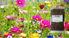 """Blumenwiese """" Bienen und Hummelwiese """" Samen von ca.100 - 500 m² versch. Größen"""