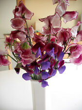 FLOWER SWEET PEA SPENCER LISA MARIE 30 FINEST SEEDS