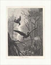 Votammo-arrivano I. beccacce cacciatore foresta Kröner legno chiave caccia album 050