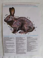 Japanisches Heilströmen beim Kaninchen
