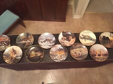 New ListingBig Cat Collector Plates 10 Plates +1 Raccoon Plate (Artist: Charles Frace')