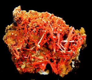 "3.5"" Crocoite Crystal Cluster, Adelaide, Tasmania, Australia! CC260"