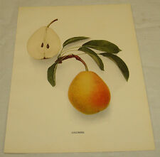 1921 Antique Print/COLUMBIA/From Pears of New York, by Hedrick