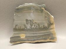 Cotham Marble Stromatolite Polished Stone Slab 3 inch Fossil England #5