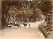 Japon, kasuga at Nara  Vintage albumen print, Japan Tirage albuminé aquare