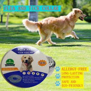62CM Collar Dogs Ticks And Flea Treatment 8 Months Protection Plant Pest AU