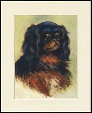 CAVALIER OR KING CHARLES ENGLISH TOY SPANIEL HEAD STUDY DOG PRINT READY TO FRAME