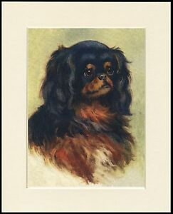 CAVALIER OR KING CHARLES ENGLISH TOY SPANIEL HEAD STUDY DOG PRINT READY TO FRAME