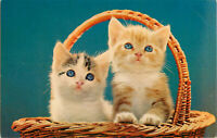 Postcard Blue Eyed Kittens