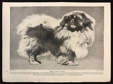 "1934 Dog Print / Bookplate - PEKINGESE, ""Nik-Ko of Crossogue"", Bred in S. Africa"