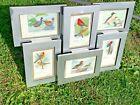 Antique 1915 Louis Agassiz Fuertes Print Collage BIRDS of WORLD OOAK Rare ❤️sj8m