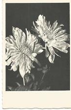 Postkarte Blumen Astern, Kupfertiefdruck, s/w wohl 20ér Jahre