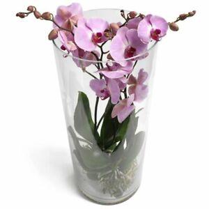 clear glass large 50cm/20inch stem vase conical floor cylinder vase centrepiece